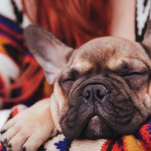 Как избавиться от запаха собаки: рецепты и советы как просто и быстро устранить неприятный запах от животного (70 фото)