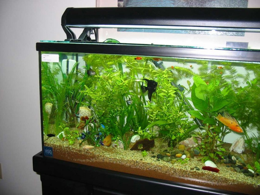важно, как красиво обустроить аквариум фото передний