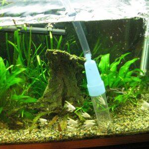 Как очистить аквариум: лучшие самодельные приспособления и советы по очистке аквариума в домашних условиях (115 фото)