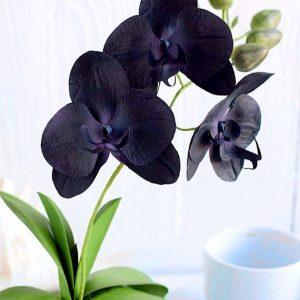 Орхидея своими руками: мастер-класс изготовления и пошаговое описание создания искусственного цветка (видео + 105 фото)